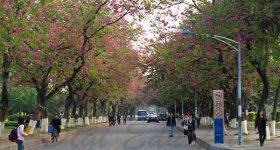 South_China_Normal_University-campus4