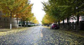 Dalian_Polytechnic_University-campus2