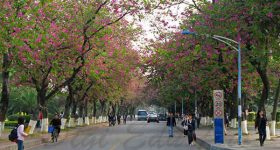 South_China_Normal_University-campus4